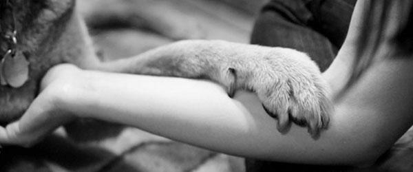 養過寵物的人會懂...寵物訣別前的最後歡樂時光攝影集0