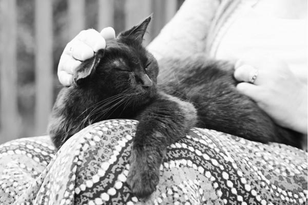 養過寵物的人會懂...寵物訣別前的最後歡樂時光攝影集10
