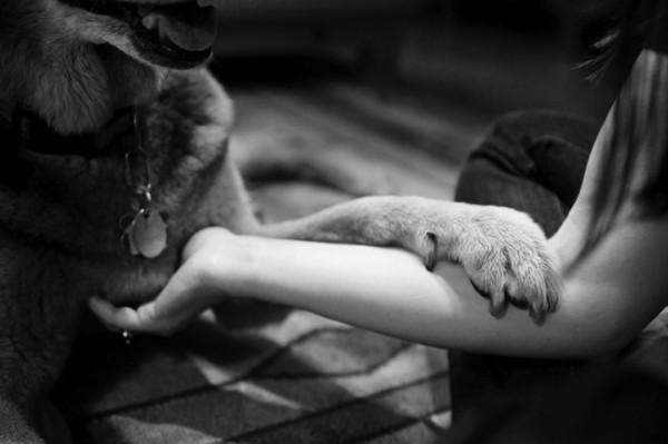 養過寵物的人會懂...寵物訣別前的最後歡樂時光攝影集2