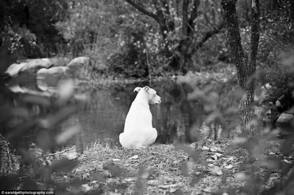 養過寵物的人會懂...訣別前的最後歡樂時光攝影集15