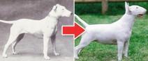 一個世紀下來,人類把狗變得不成狗樣0