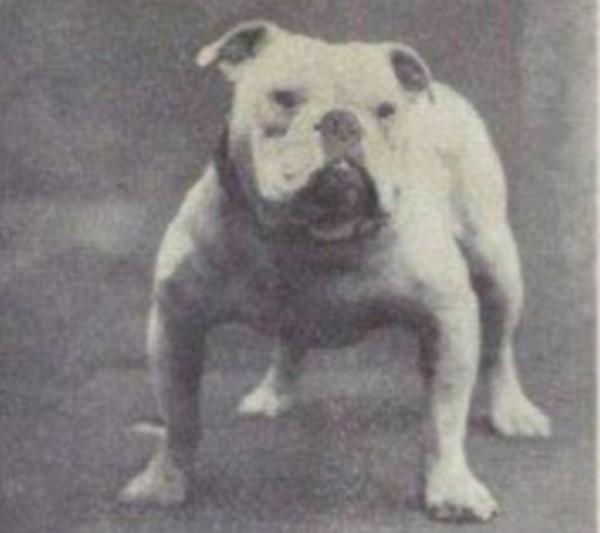 一個世紀下來,人類把狗變得不成狗樣3