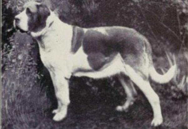 一個世紀下來,人類把狗變得不成狗樣5