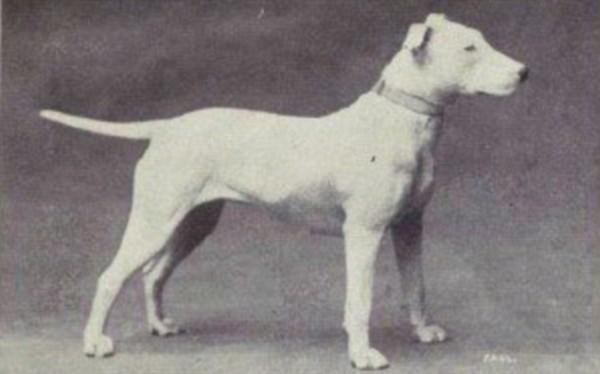 一個世紀下來,人類把狗變得不成狗樣7
