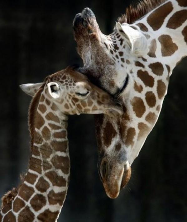 動物們的大號版 vs 小號版14