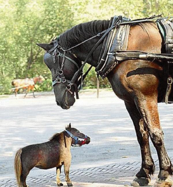 動物們的大號版 vs 小號版15