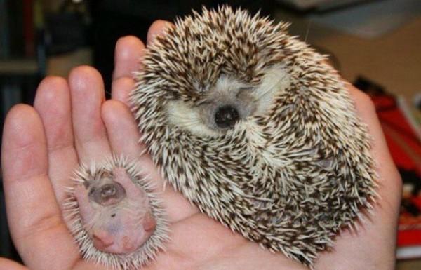動物們的大號版 vs 小號版3