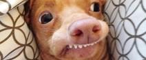 牙齒長歪被拋棄的小狗,網路上逆轉爆紅