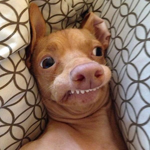 牙齒長歪被拋棄的小狗,網路上逆轉爆紅1