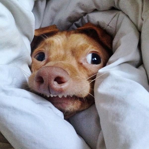 牙齒長歪被拋棄的小狗,網路上逆轉爆紅6