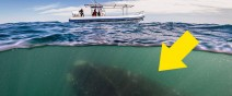 賞鯨遊客沒發現鯨魚其實在賞他們