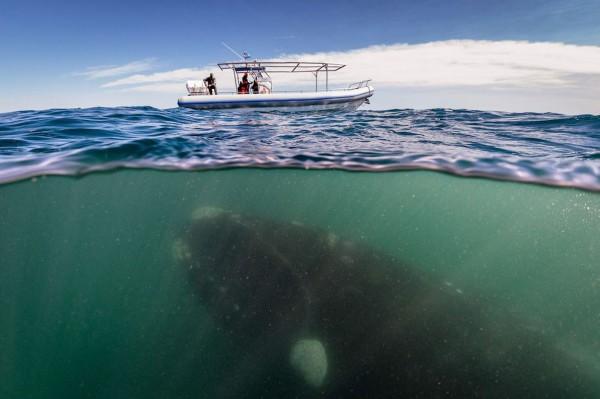 賞鯨遊客沒發現鯨魚其實在賞他們1