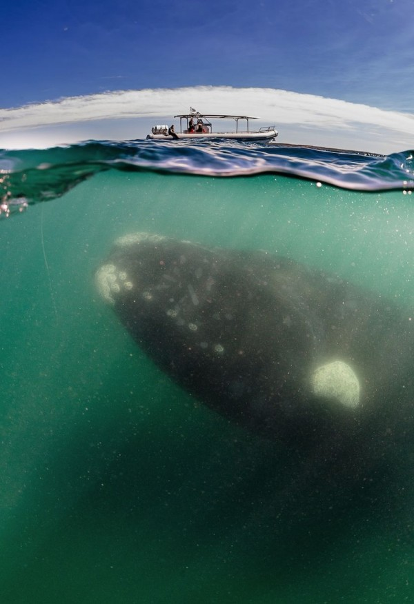 賞鯨遊客沒發現鯨魚其實在賞他們2