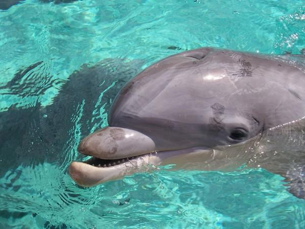 送海草當送花!關於海豚的11個可愛事實10