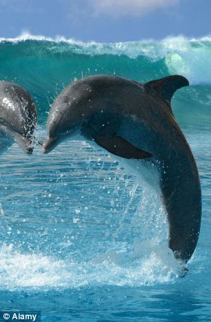 送海草當送花!關於海豚的11個可愛事實9