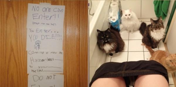 養貓前,養貓後2