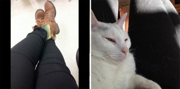 養貓前,養貓後4