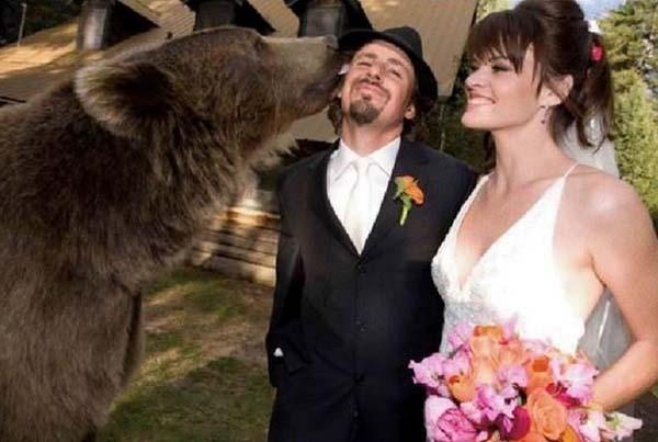 人類收養兩隻野熊10