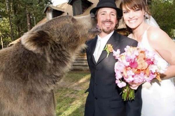 人類收養兩隻野熊11