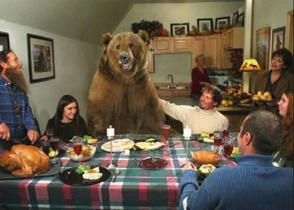 人類收養兩隻野熊12