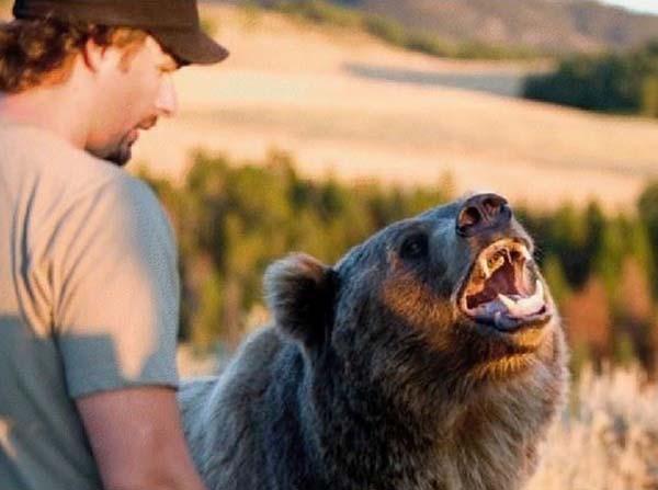 人類收養兩隻野熊13