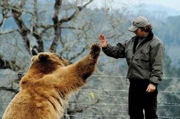 人類收養兩隻野熊18