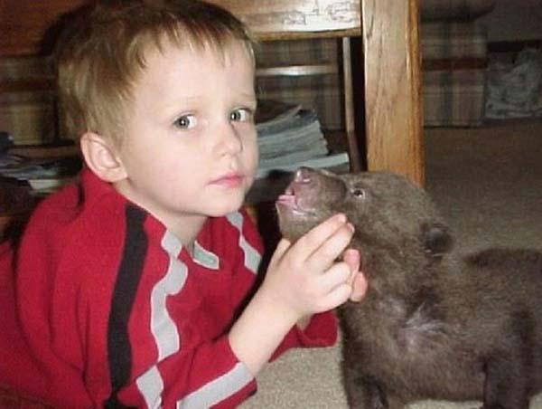 人類收養兩隻野熊2