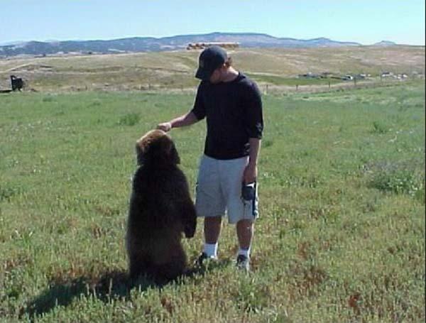 人類收養兩隻野熊4