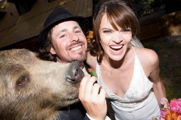 人類收養兩隻野熊9
