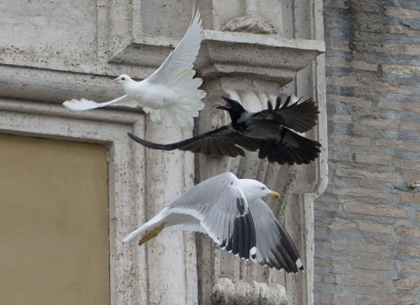 梵諦岡的和平鴿3