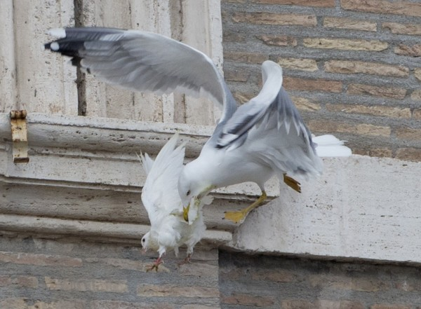 Vatican Pope Doves