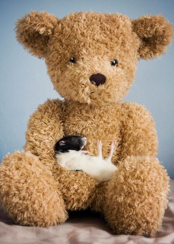 老鼠超愛小熊娃娃!10