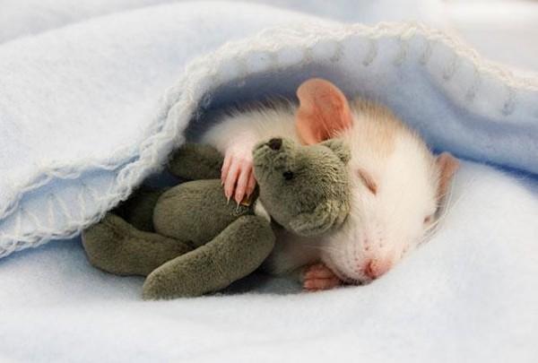 老鼠超愛小熊娃娃!3