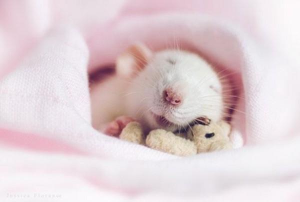 老鼠超愛小熊娃娃!7