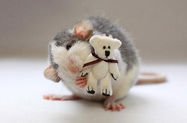 老鼠超愛小熊娃娃13
