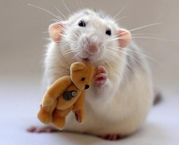 老鼠超愛小熊娃娃14