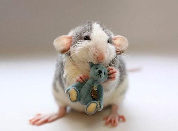 老鼠超愛小熊娃娃15