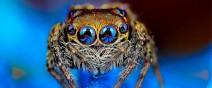 蜘蛛在看你