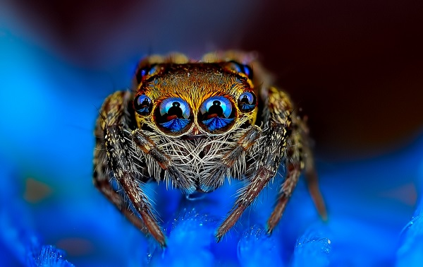 蜘蛛在看你1