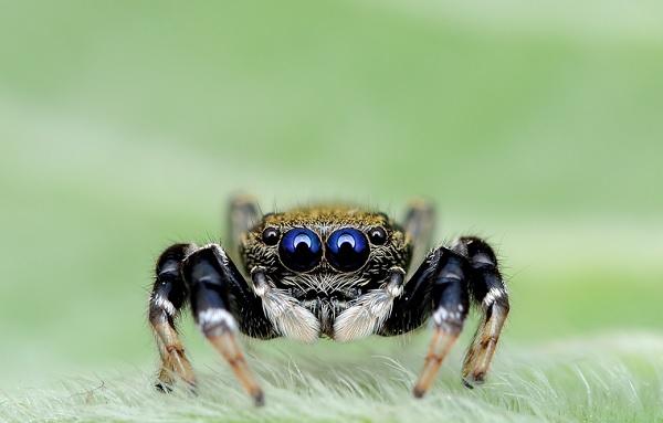 蜘蛛在看你10