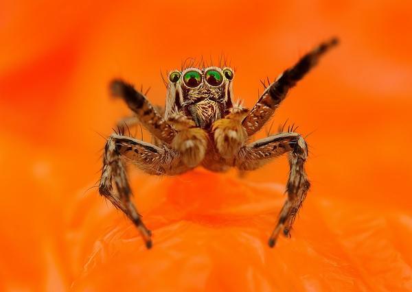 蜘蛛在看你11
