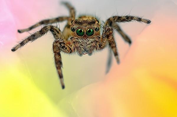 蜘蛛在看你2