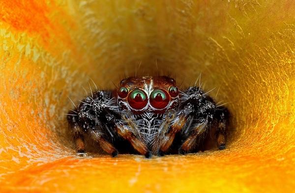 蜘蛛在看你3