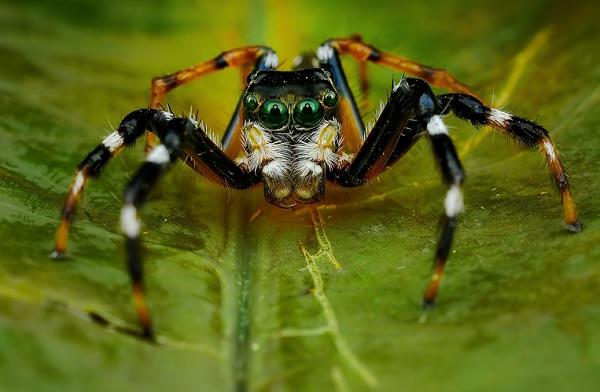 蜘蛛在看你4