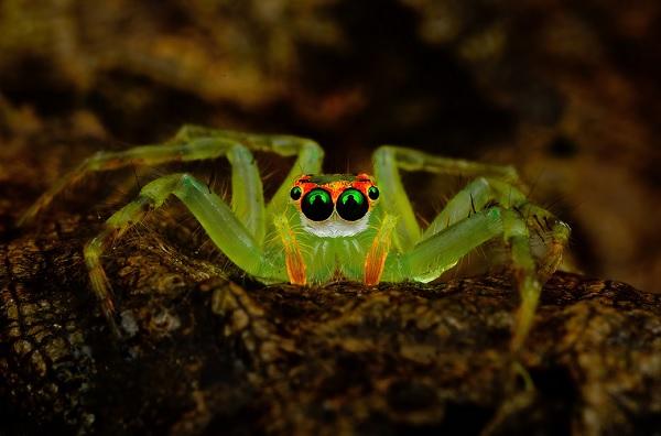 蜘蛛在看你5