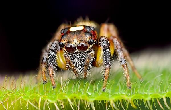 蜘蛛在看你6