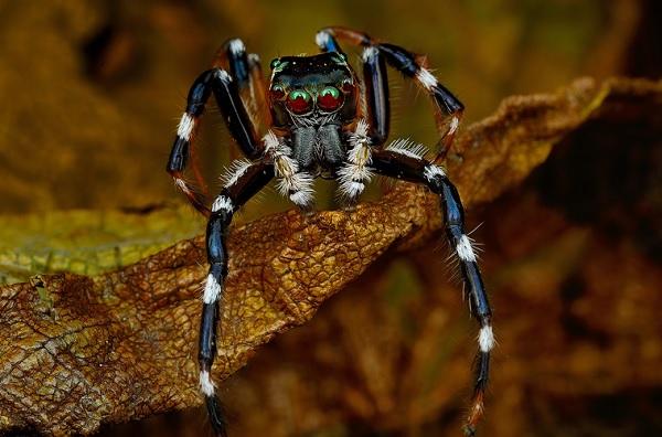 蜘蛛在看你7