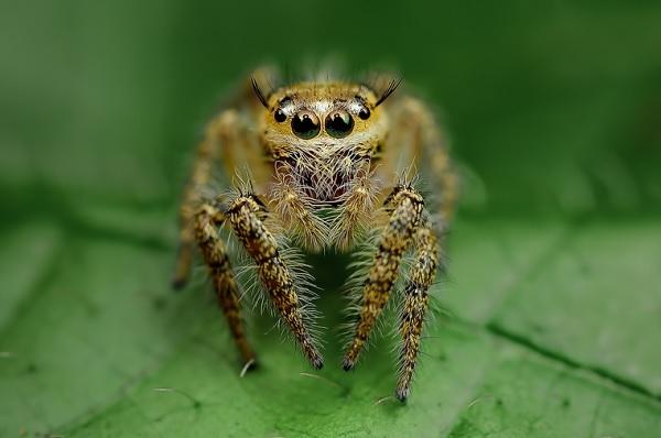 蜘蛛在看你8