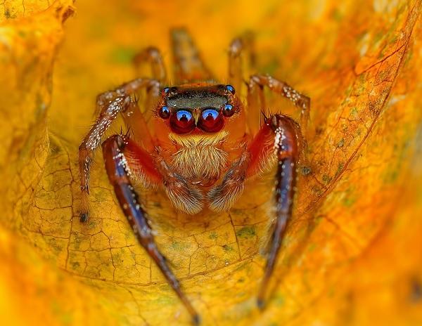蜘蛛在看你9