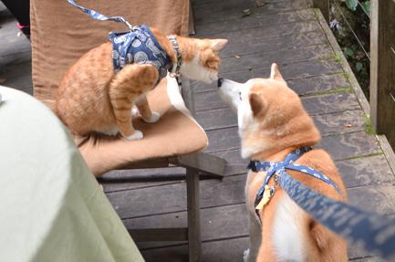 貓咪狗狗雙拍檔16
